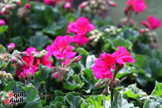 معرض الزهور (3)
