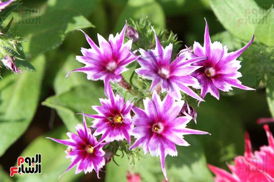 معرض الزهور (1)