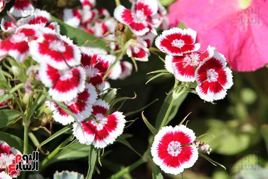 معرض الزهور (21)