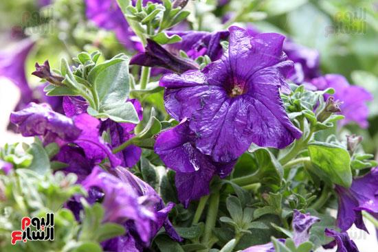 معرض الزهور (4)