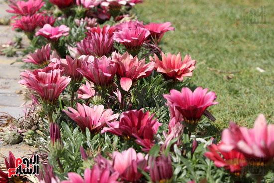 معرض الزهور (13)
