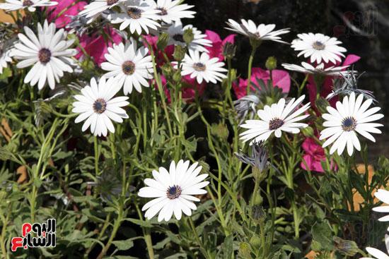 معرض الزهور (23)