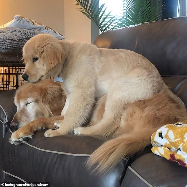 جرو صغير يساعد كلب أعمى على اللعب والمشى .. أعرف القصة؟  (1)
