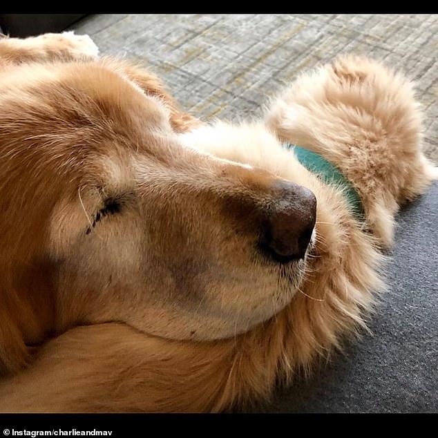 جرو صغير يساعد كلب أعمى على اللعب والمشى .. أعرف القصة؟  (2)