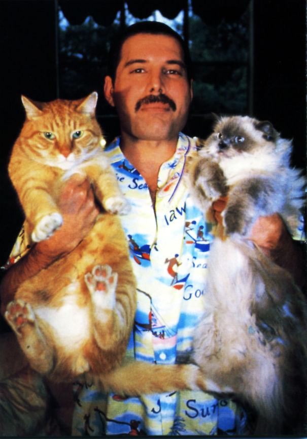 فريدى ميركورى مع قططه  (8)