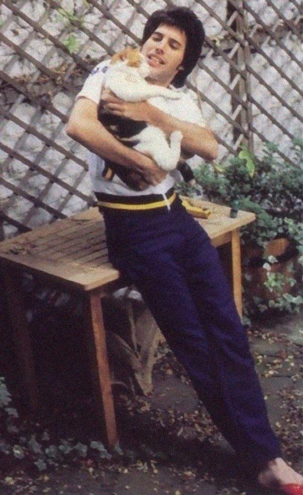 فريدى ميركورى مع قططه  (9)