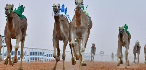 مهرجان الملك عبد العزيز للأبل