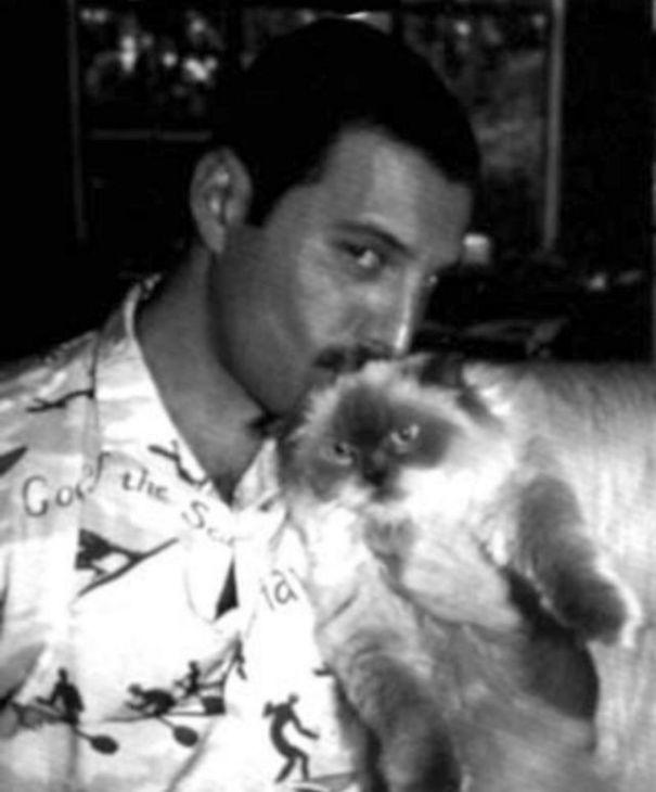 فريدى ميركورى مع قططه  (17)