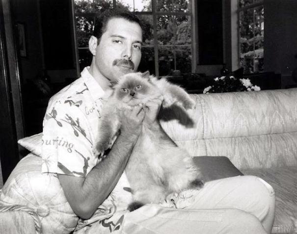 فريدى ميركورى مع قططه  (16)