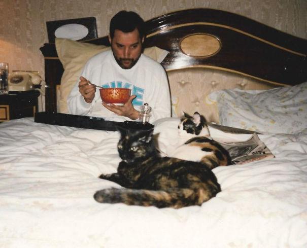 فريدى ميركورى مع قططه  (11)