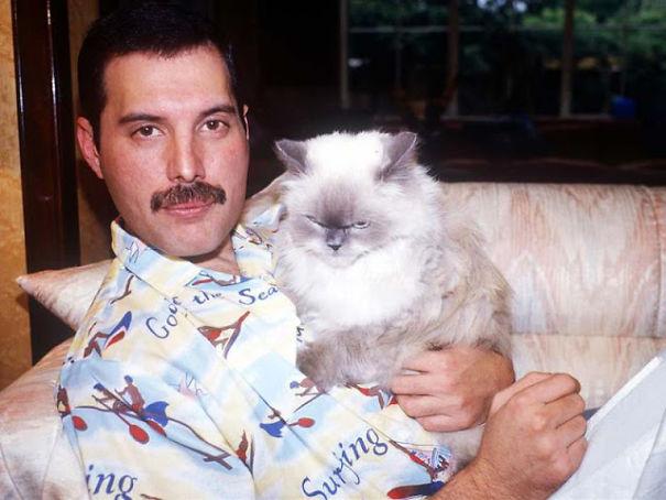 فريدى ميركورى مع قططه  (15)