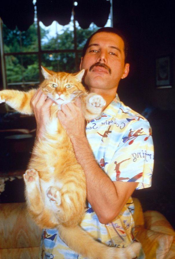 فريدى ميركورى مع قططه  (7)