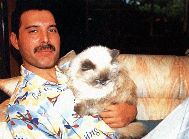 فريدى ميركورى مع قططه  (10)