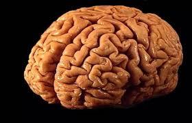 وظائف يقوم بها المخ