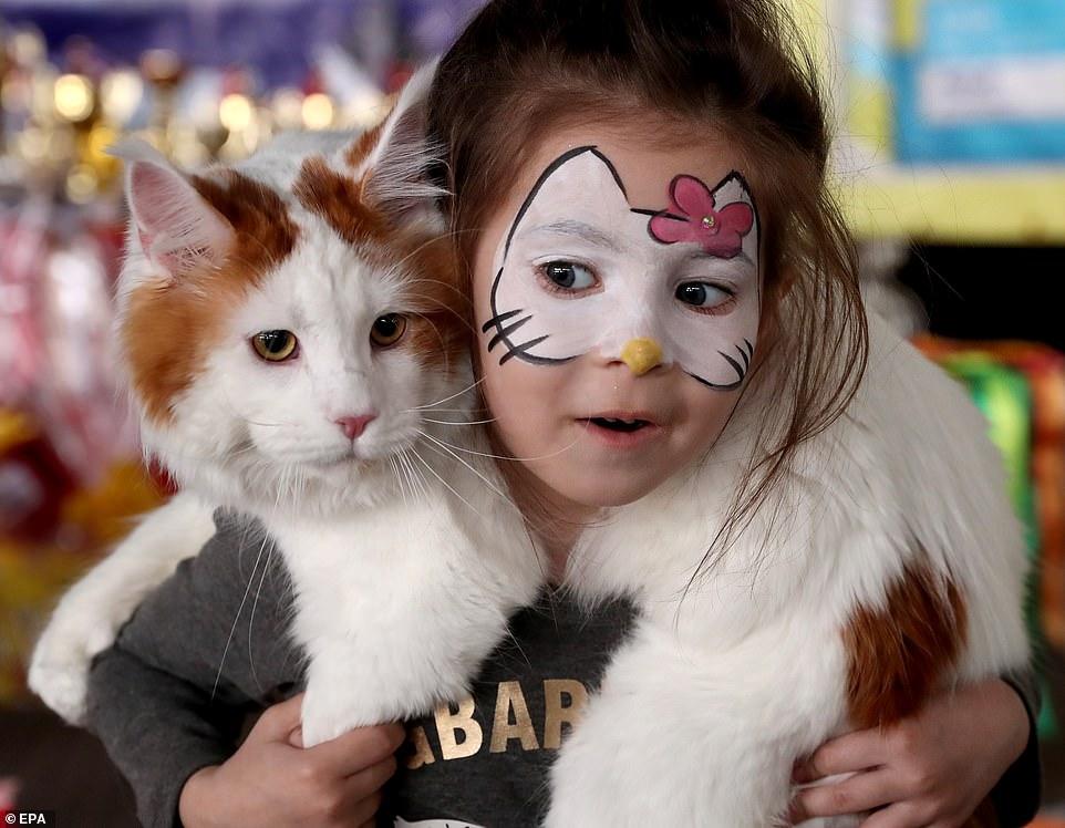 القطط المشاركة فى المهرجان  (5)