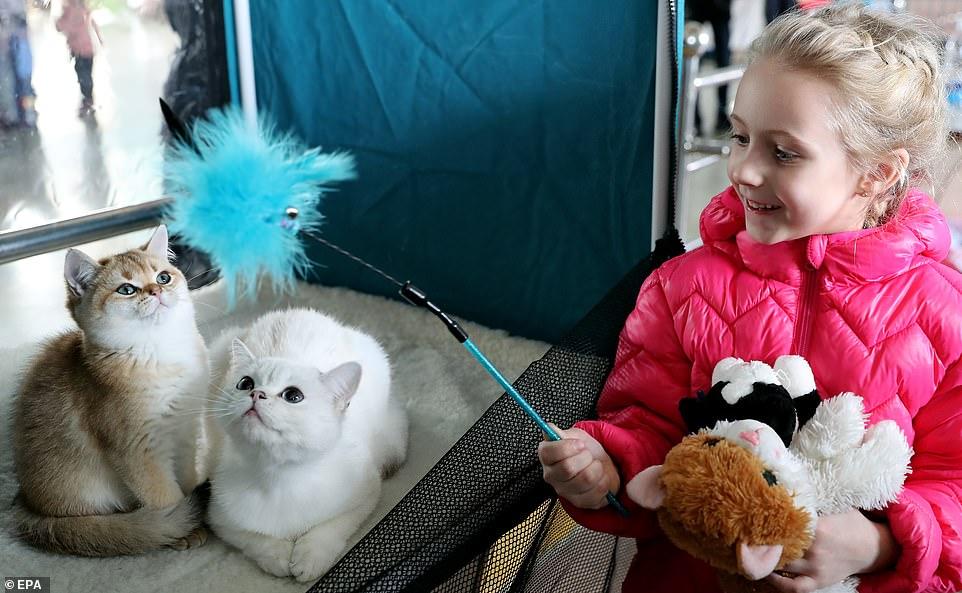 القطط المشاركة فى المهرجان  (14)