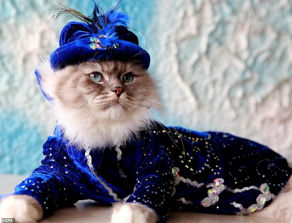 القطط المشاركة فى المهرجان  (2)