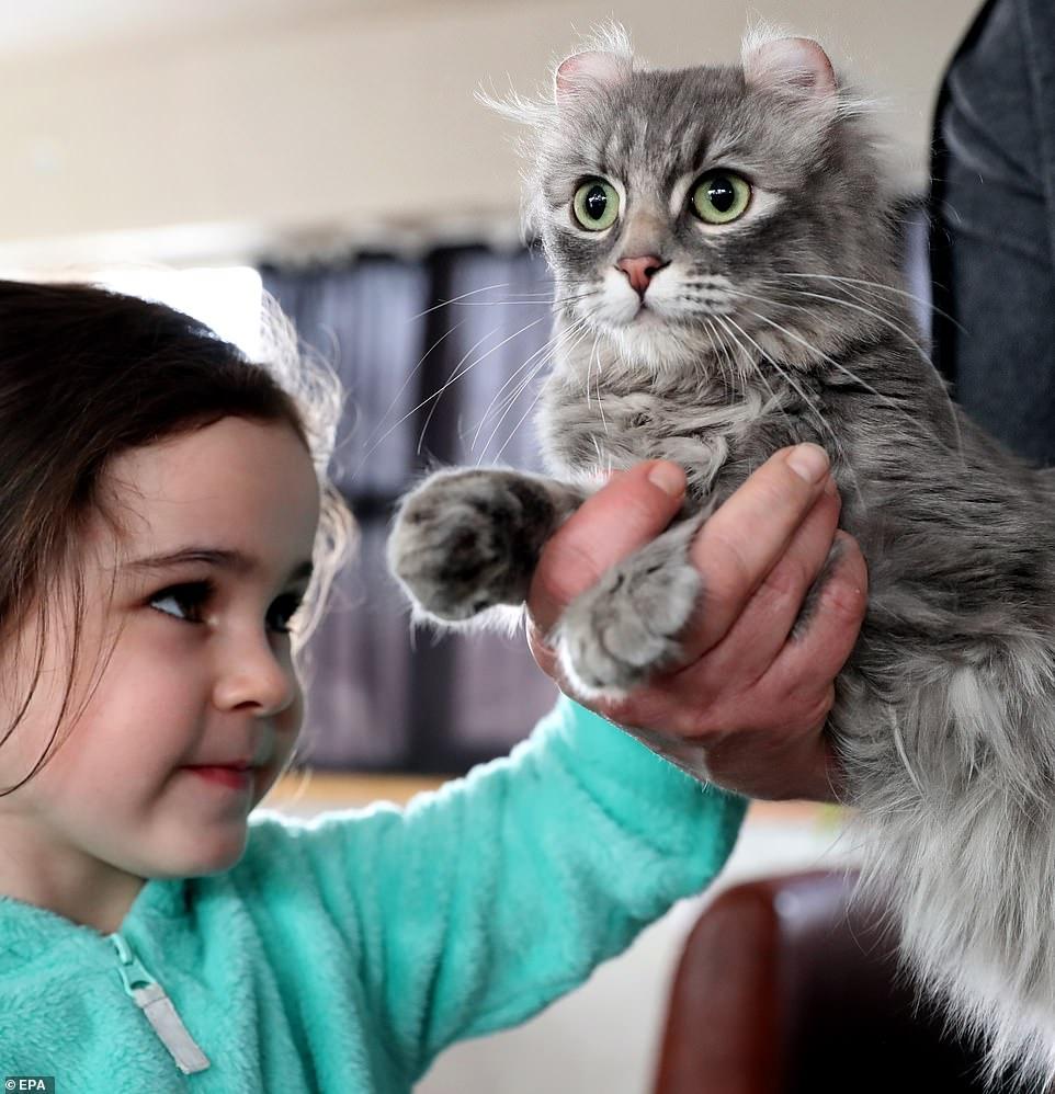 القطط المشاركة فى المهرجان  (4)