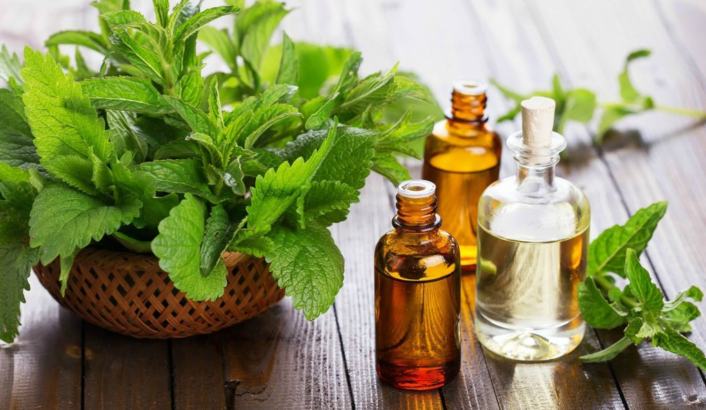 peppermint-oil-feature-grooming_1024x1024