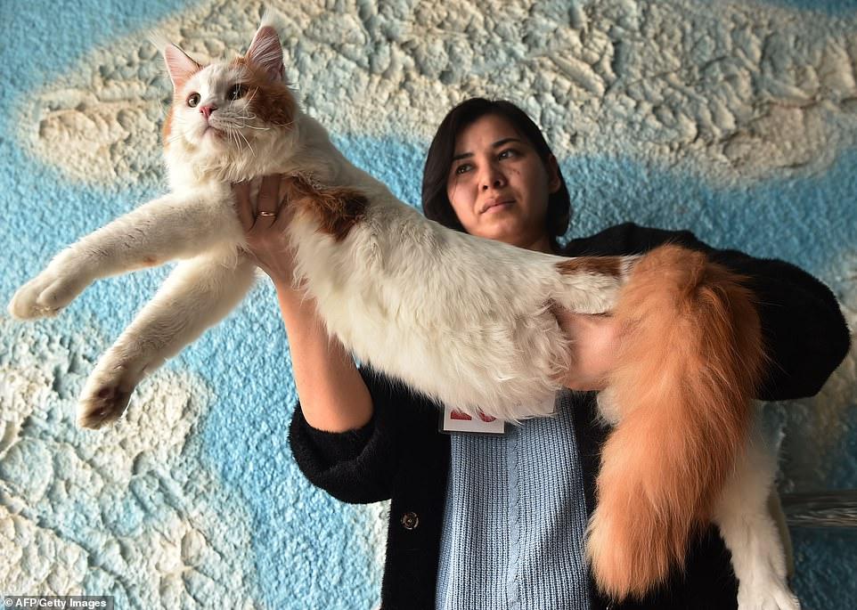 القطط المشاركة فى المهرجان  (11)