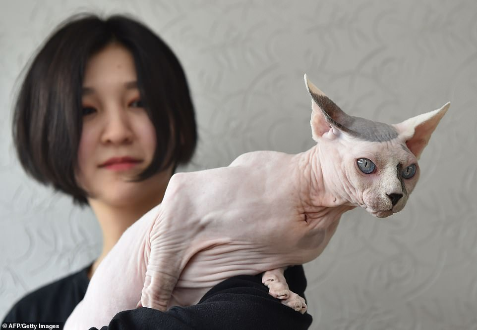 القطط المشاركة فى المهرجان  (1)