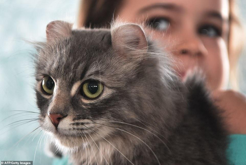 القطط المشاركة فى المهرجان  (3)
