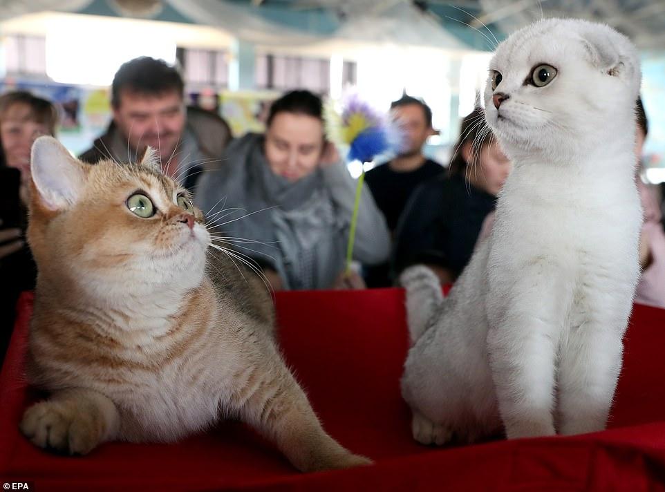 القطط المشاركة فى المهرجان  (10)
