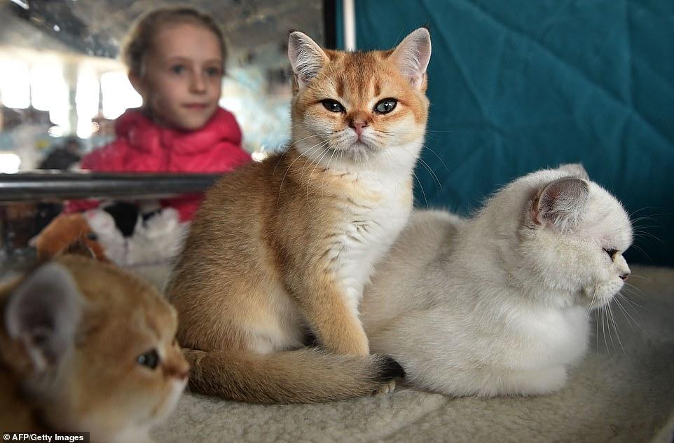 القطط المشاركة فى المهرجان  (8)