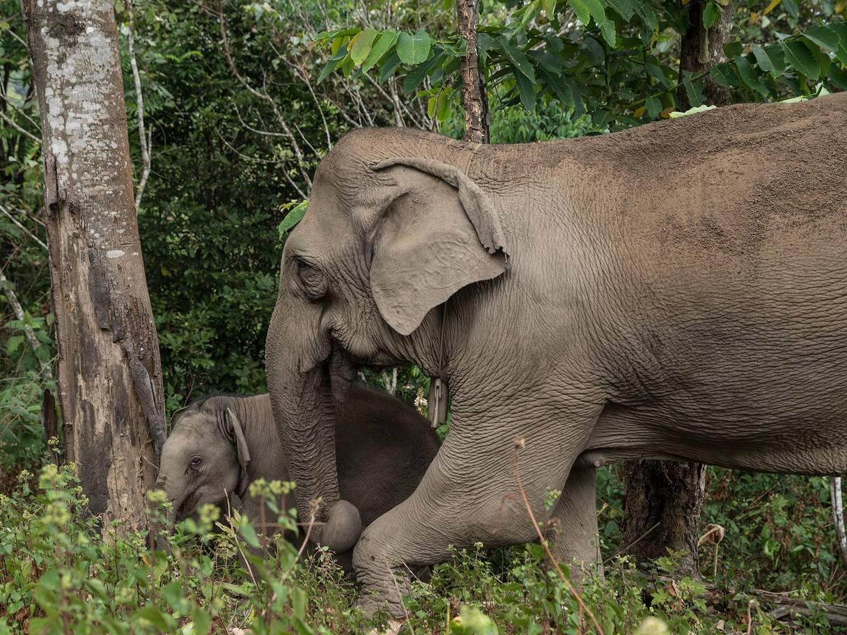 world-elephant-day-4