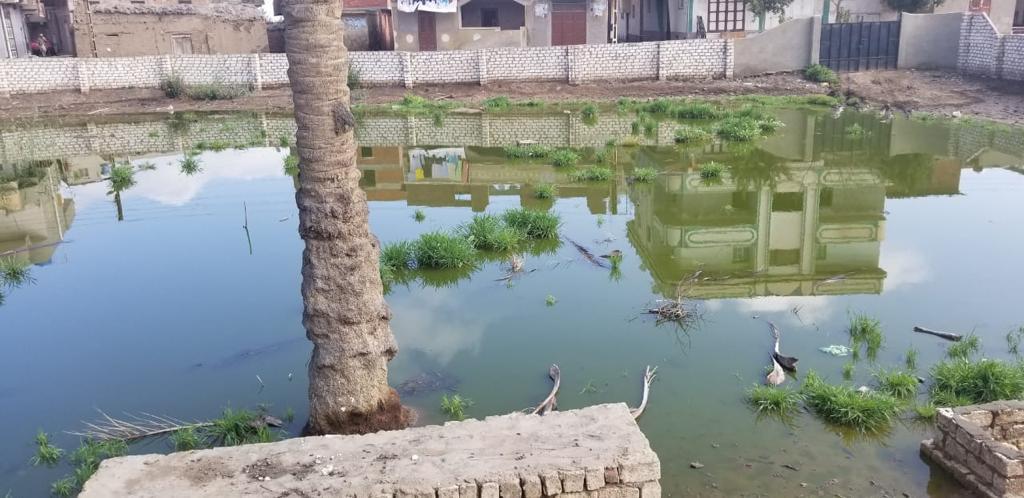 غرق شوارع قرية الشهيدى فى المحلة بالصرف الصحى (5)