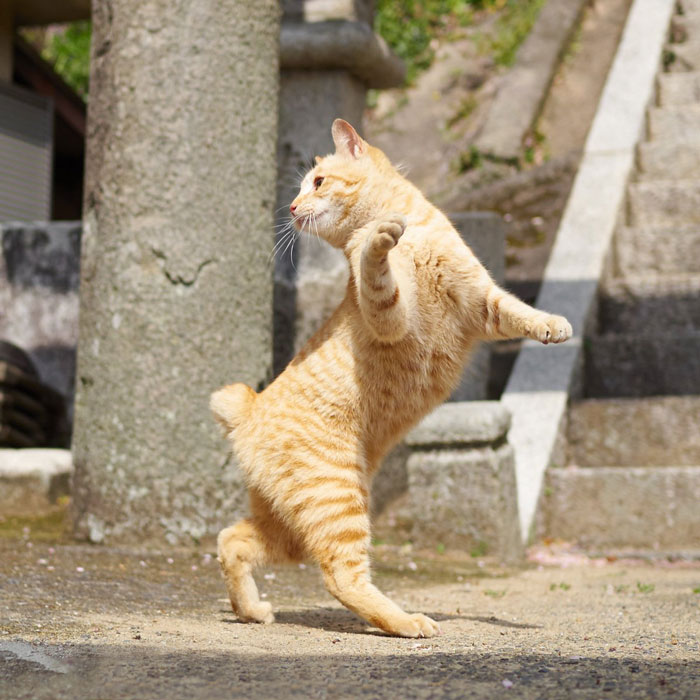 رقص القطط (28)