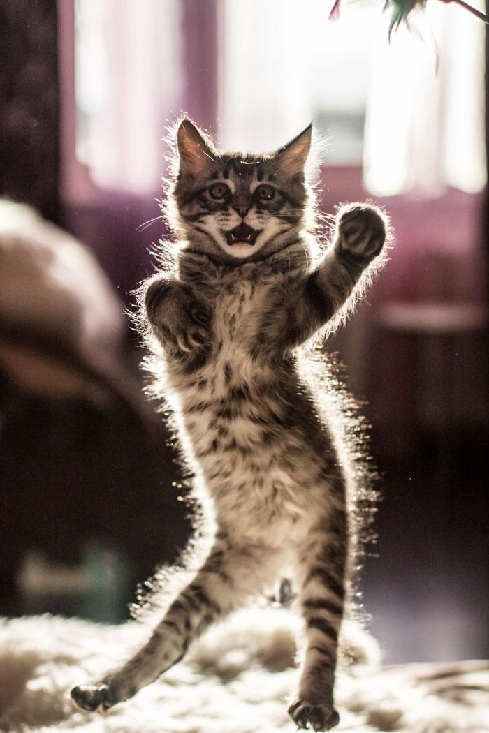 رقص القطط (13)