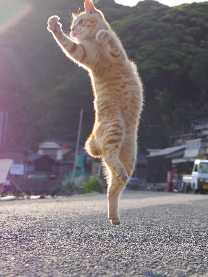 رقص القطط (19)