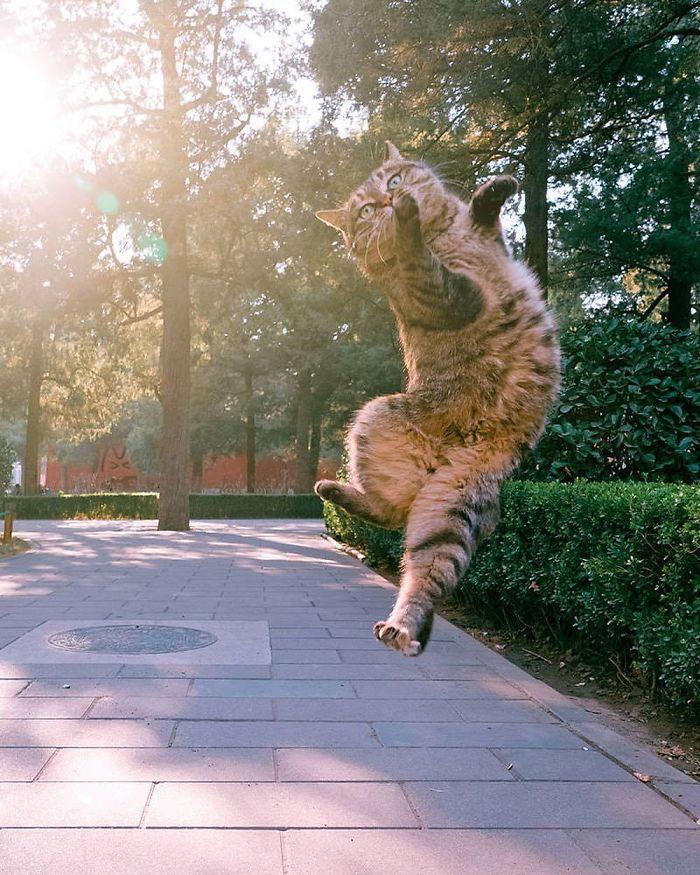 رقص القطط (1)