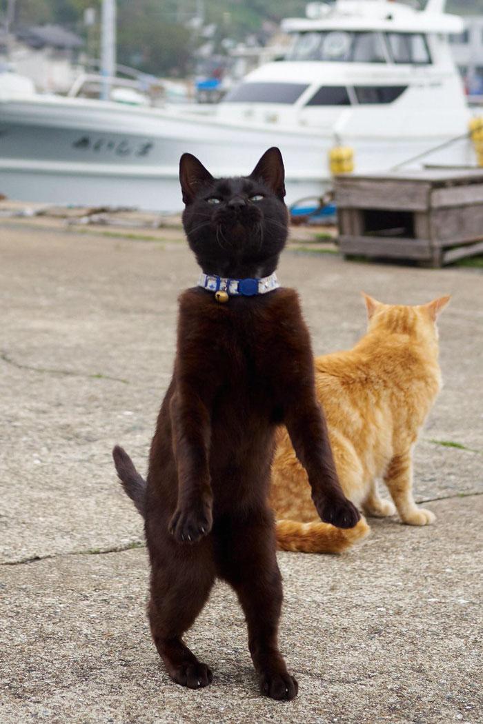 رقص القطط (24)