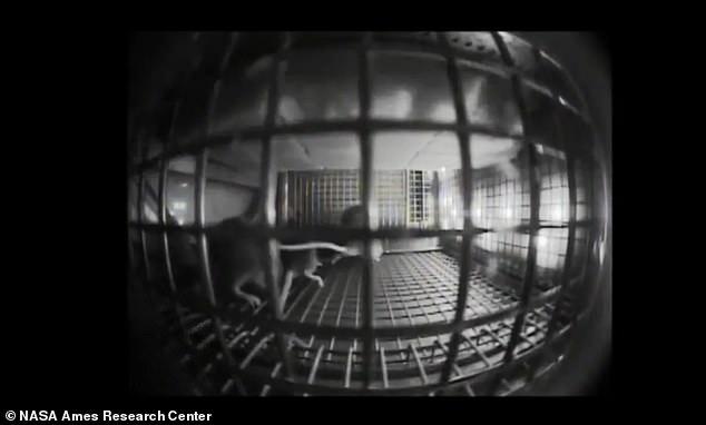الفئران بمحطة الفضاء الدولية