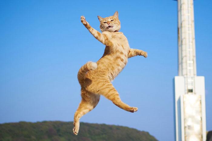 رقص القطط (30)