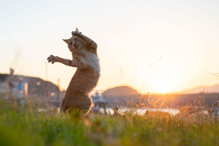 رقص القطط (18)