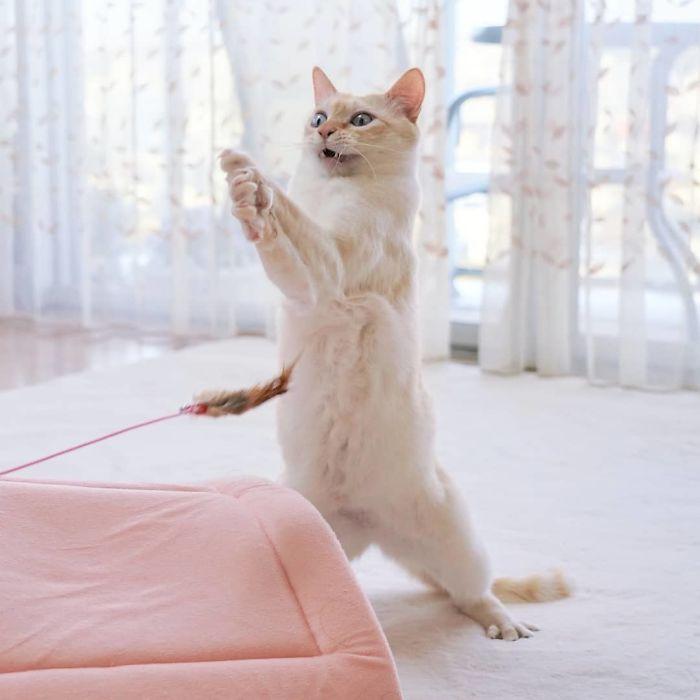 رقص القطط (6)