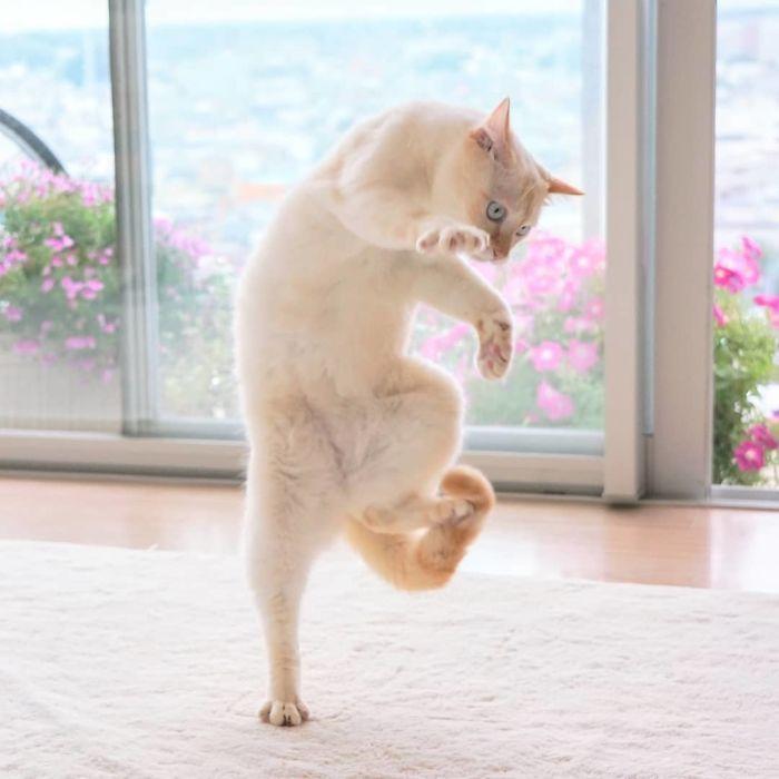رقص القطط (38)