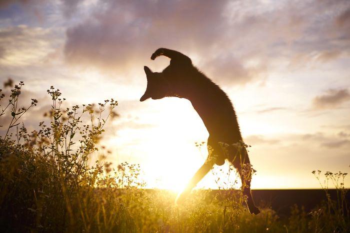 رقص القطط (12)