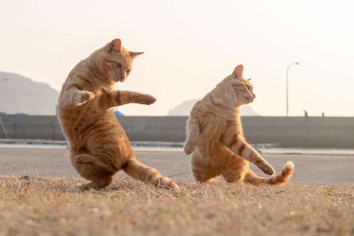 رقص القطط (21)
