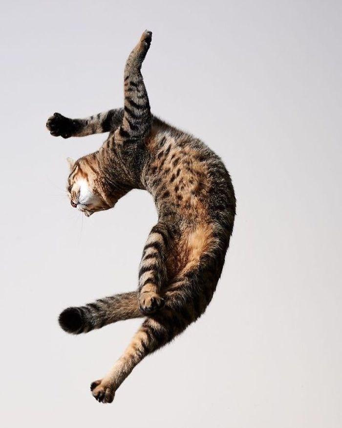 رقص القطط (5)