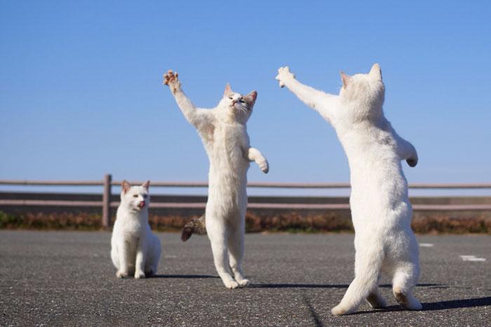 رقص القطط (25)