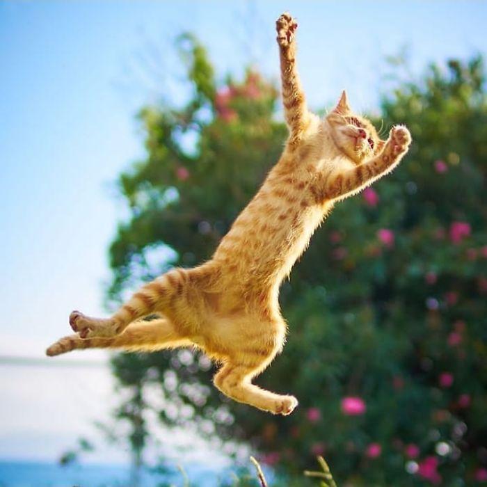 رقص القطط (36)