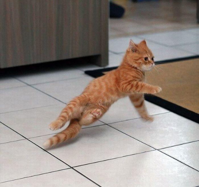 رقص القطط (15)