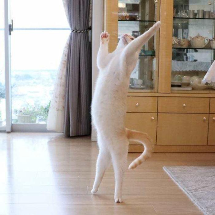 رقص القطط (3)