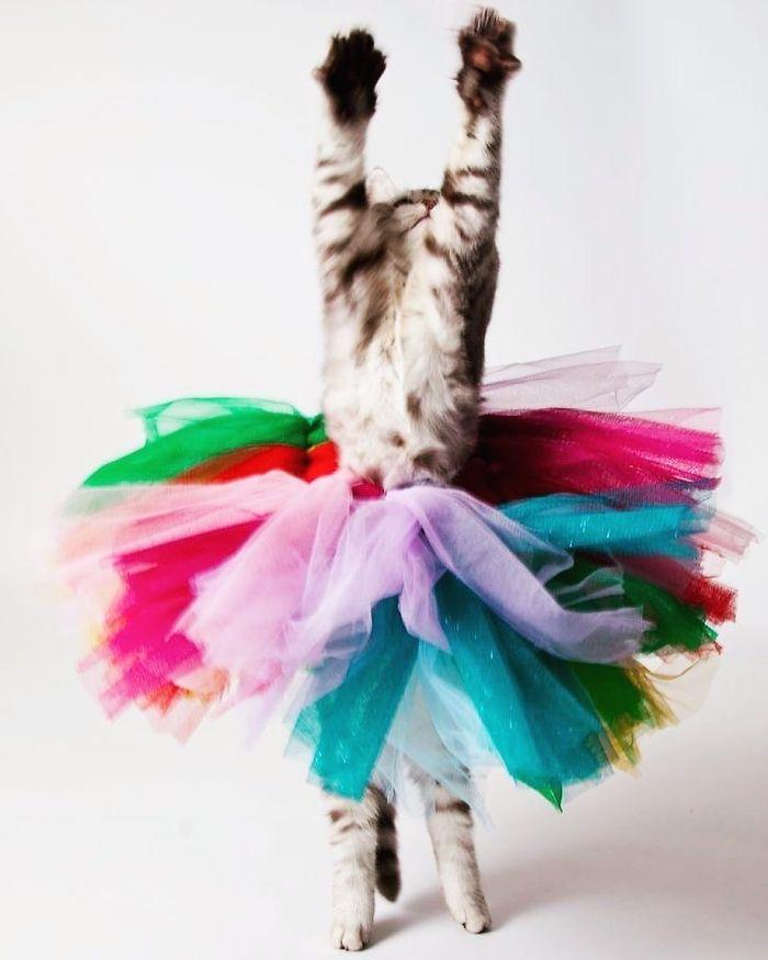 رقص القطط (39)