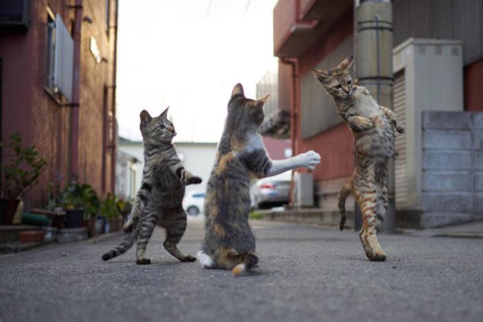 رقص القطط (32)