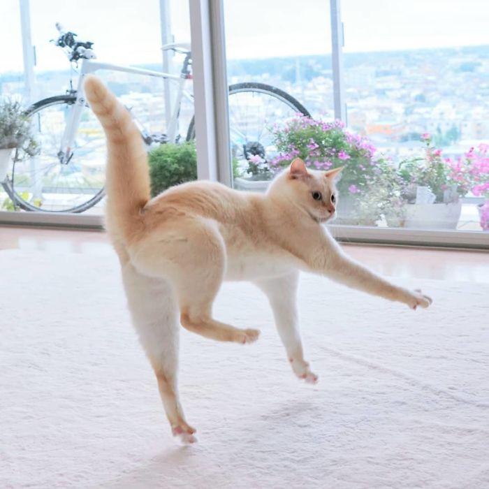 رقص القطط (40)